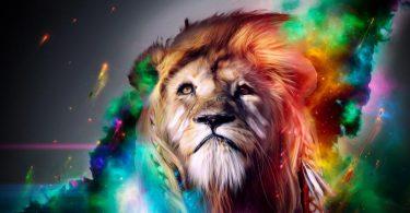 colorful hd Lion Wallpaper