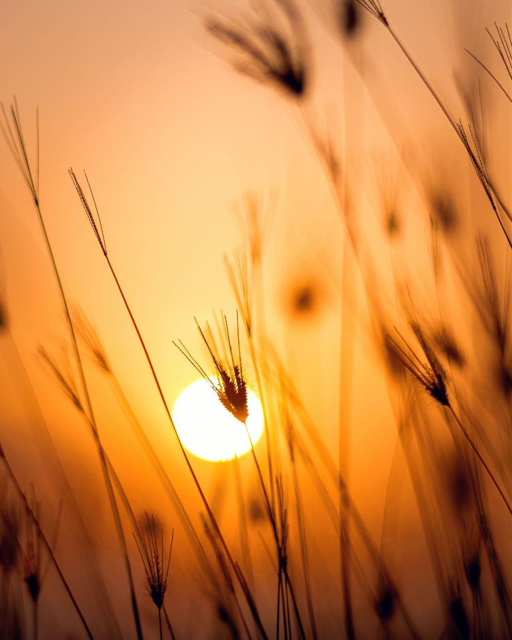 field nature Sunrise Wallpaper