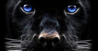 free Panther Wallpaper