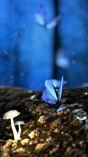 wonderful nature Butterfly Wallpaper