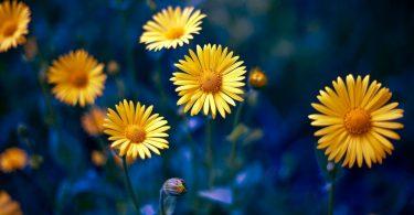 full top Spring Flowers image