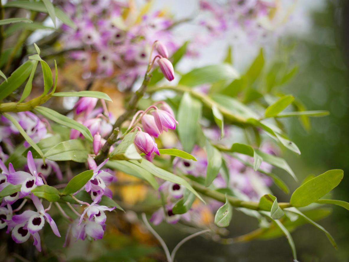 best natural Spring Flowers