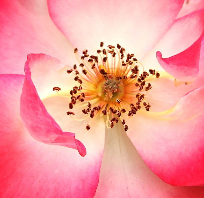full top Flower Macro image