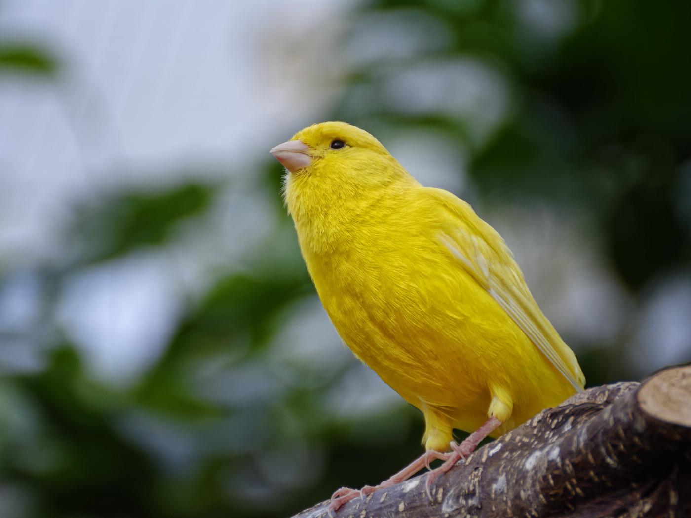 lovely Cute Birds image