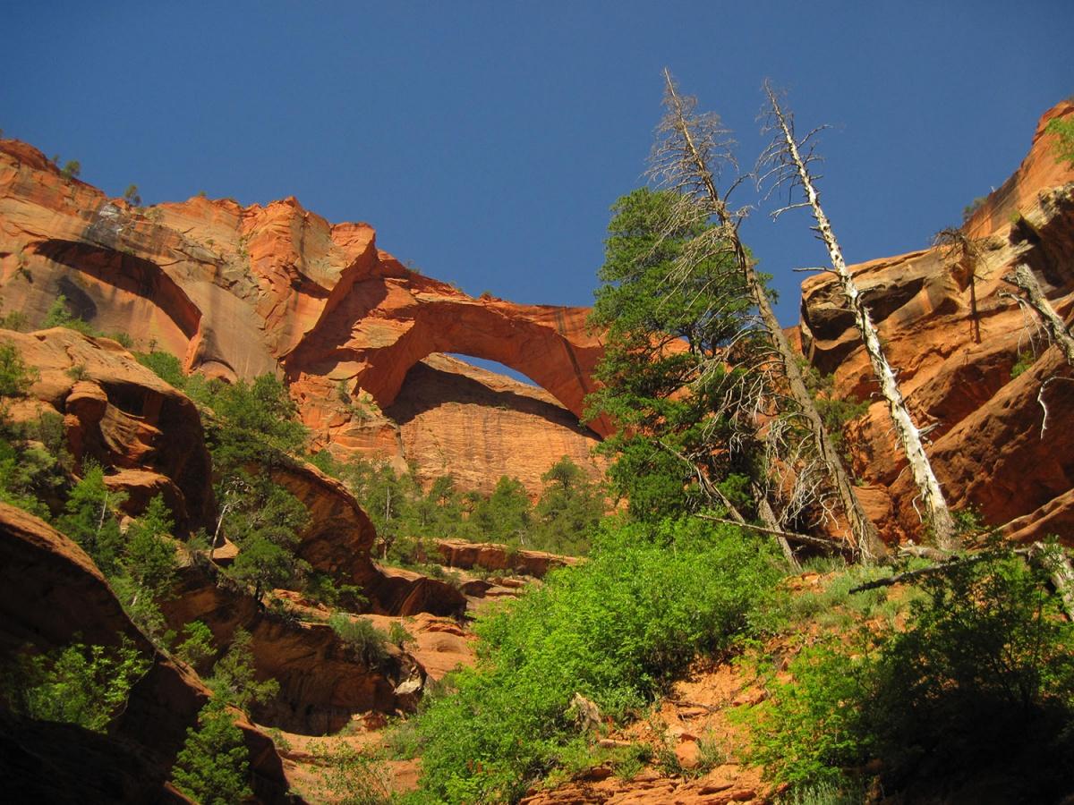 most popular Zion National Park image
