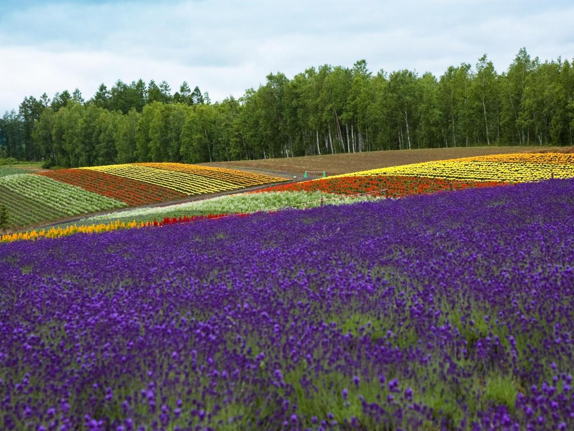 nice natural Spring Flowers image