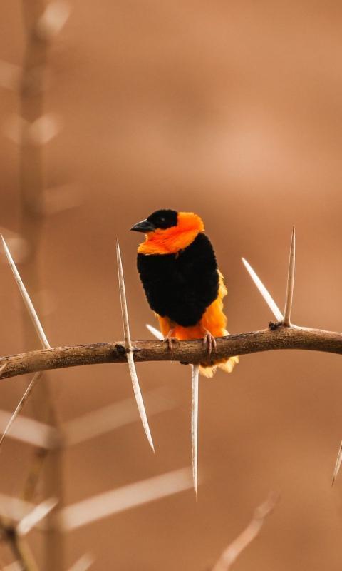 so cute bird image