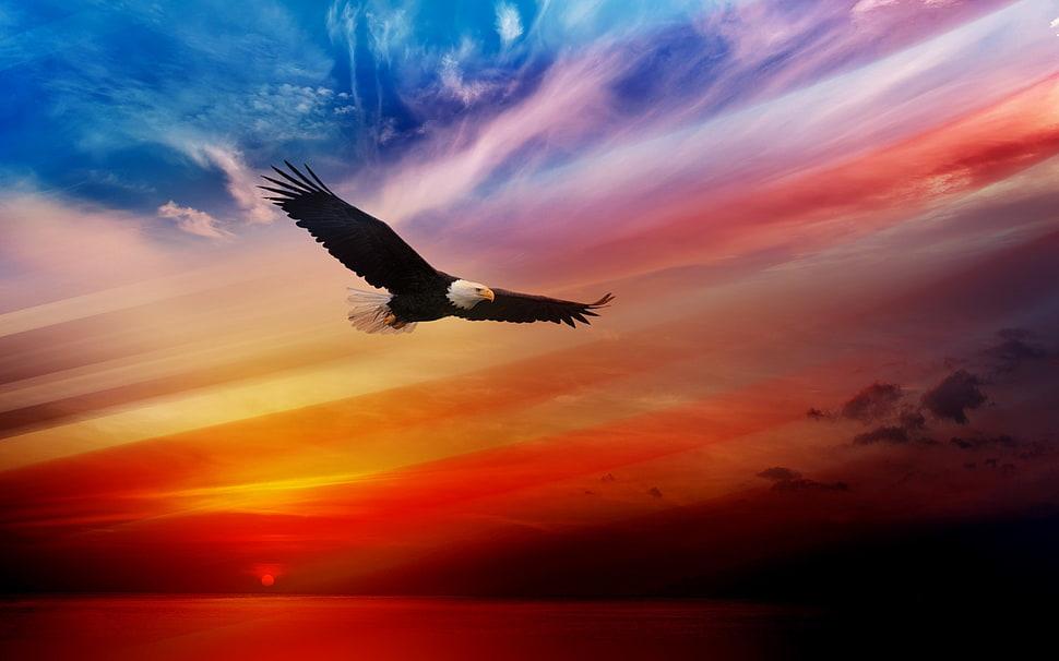 sundown natural Bald Eagle Wallpaper