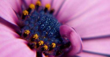 super natural Flower Macro image