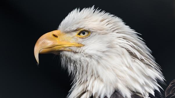 super natural Bald Eagle Wallpaper