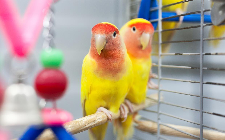 yellow Cute Birds image