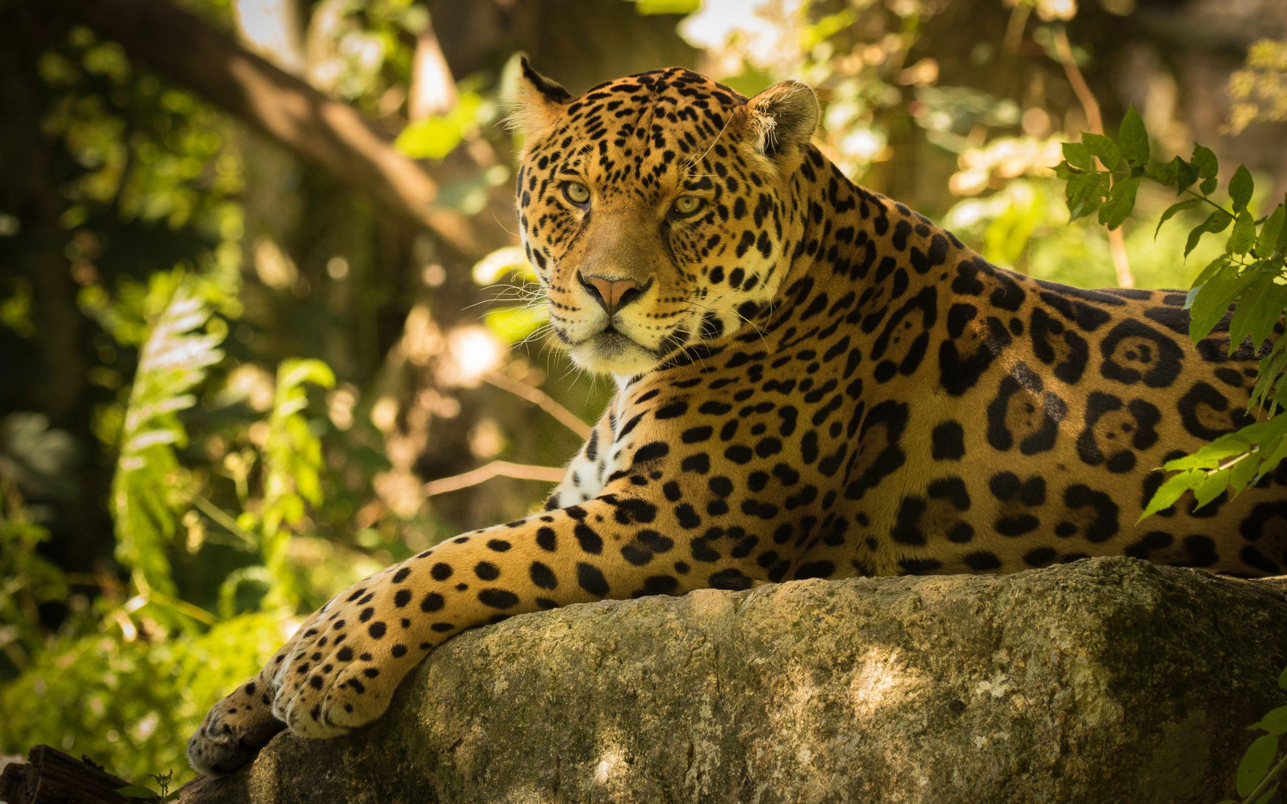 beautiful Jaguar Wallpaper